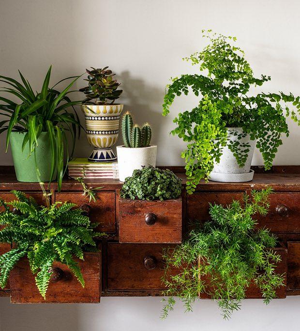 Several indoor houseplants on a wood shelf